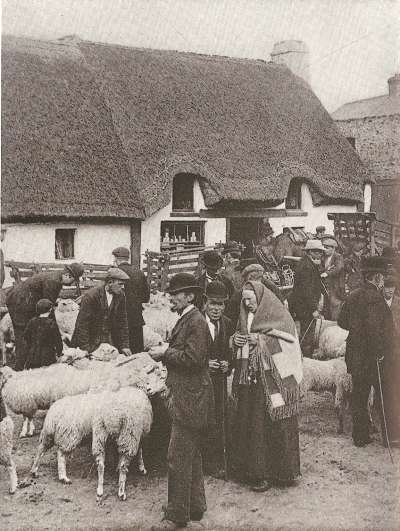 Sheep fair at Killarney, County Kerry